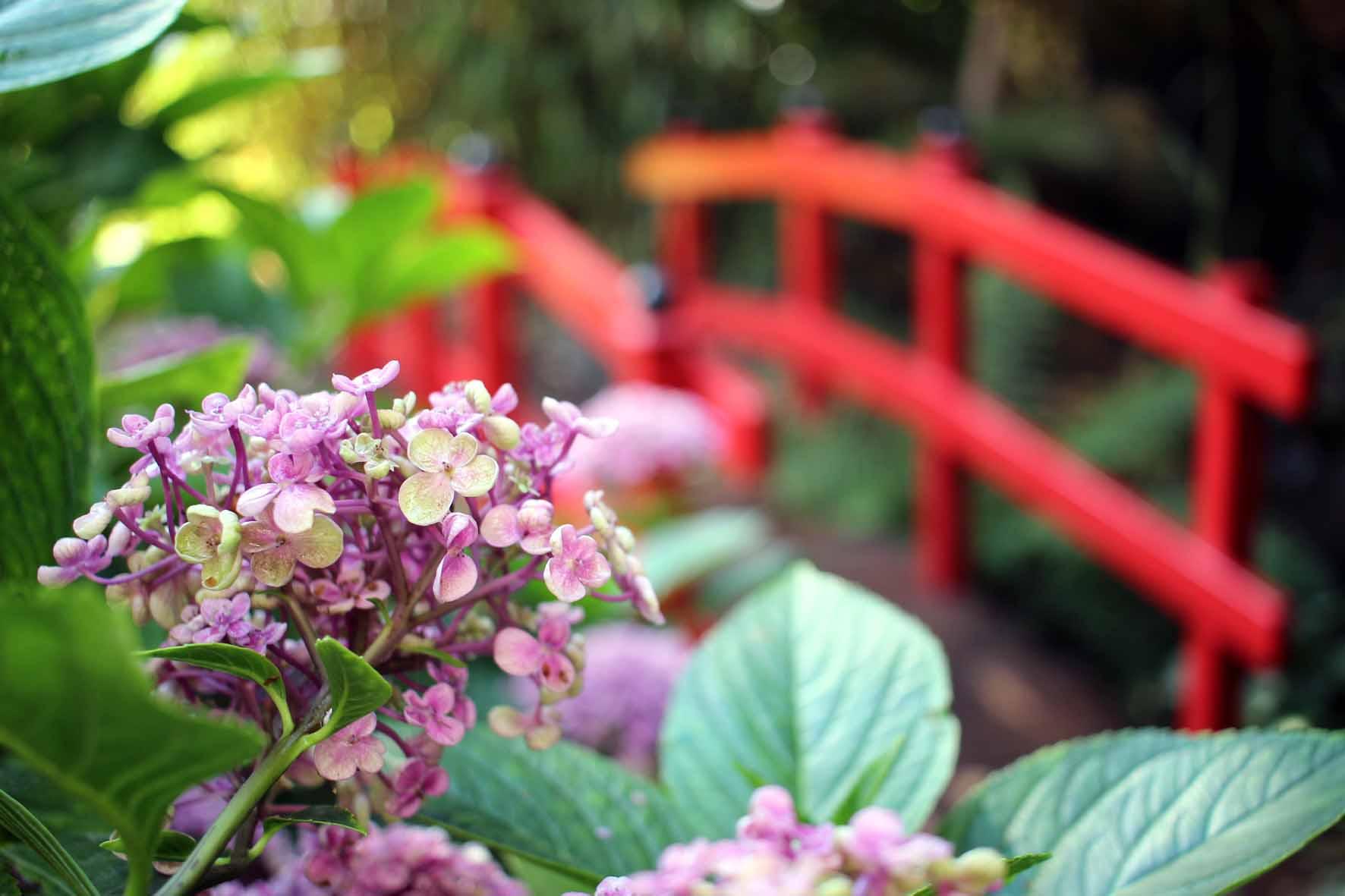 Joveniaux photographe sains du nord jardin japonais
