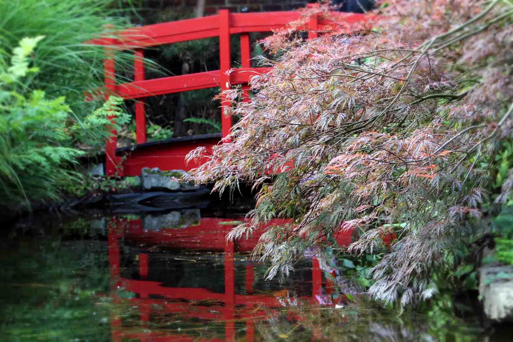 Idée sortie Le jardin japonais de Sains du Nord